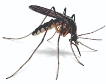 Mosquito Control: How to Get Rid of Mosquitoes